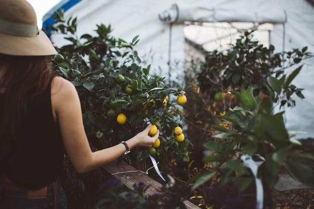 urban garden guru