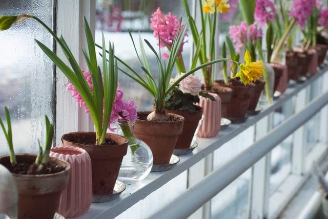 mastered windowsill urban gardening